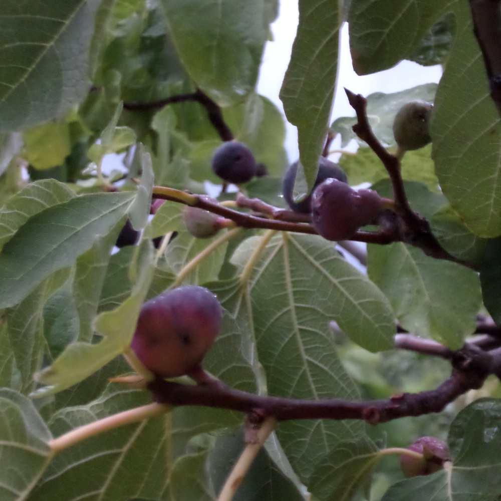 feigenambaum