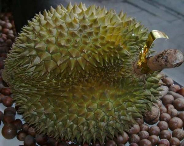 Durian Monthong, gefroren, 1 Frucht 1-2kg