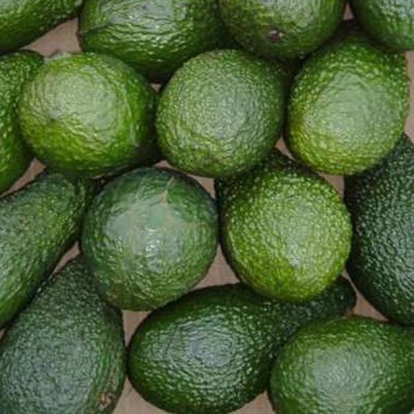 Mini Avokado Hass, Bio, Spanien, Stück