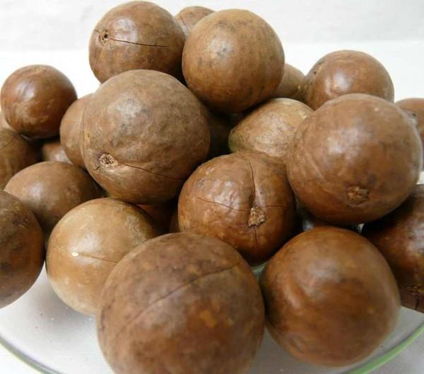 Macadamia in Schale roh Südamerika 500g