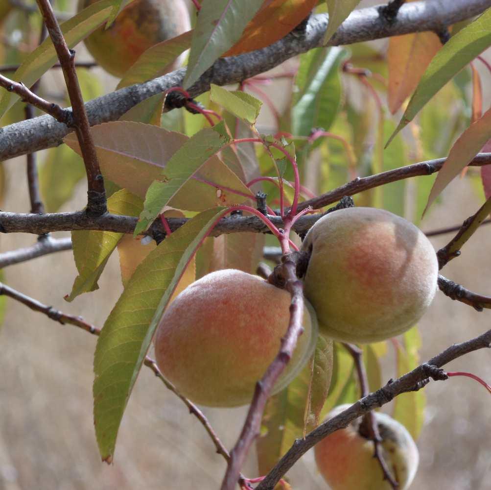 mandelnambaum