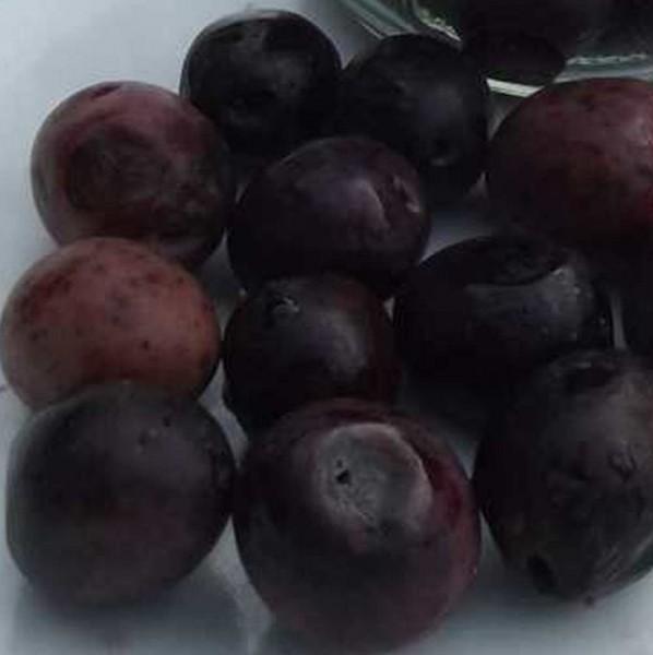 frische Oliven ohne Salz, Manzanilla, Glas 250g, Bio Roh